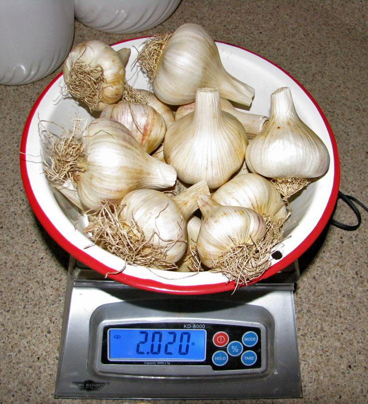 01-garlic-facts