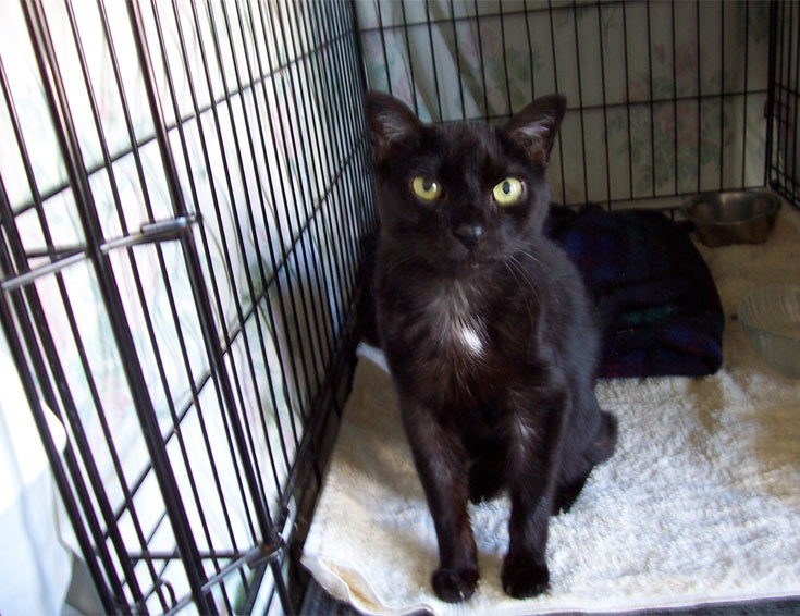 04-black-cat-shelter
