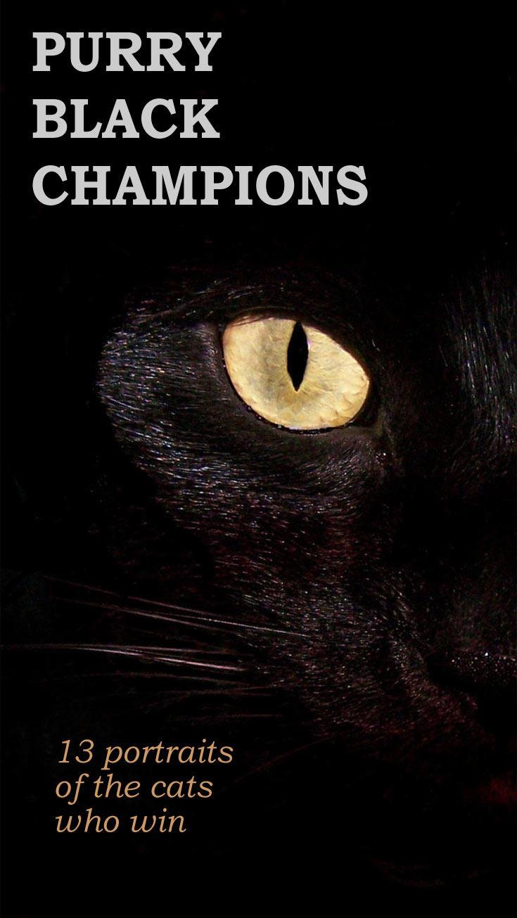 13-black-champions-cats