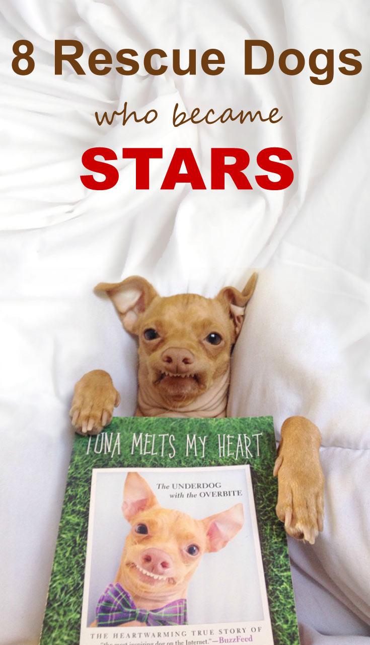 8-rescue-dogs-stars