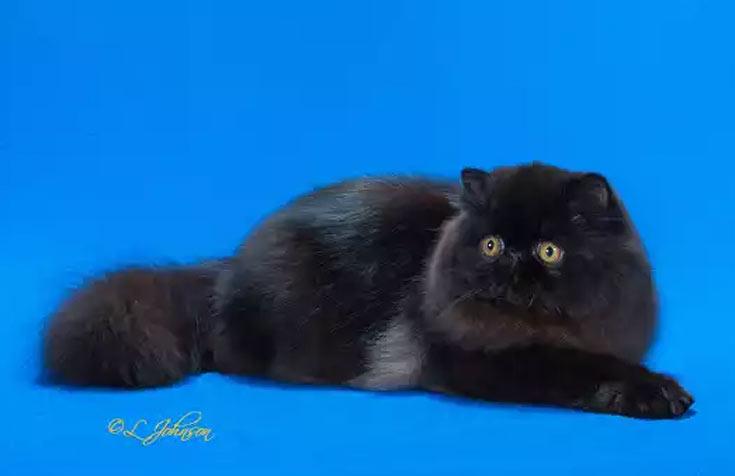 blackcat-01