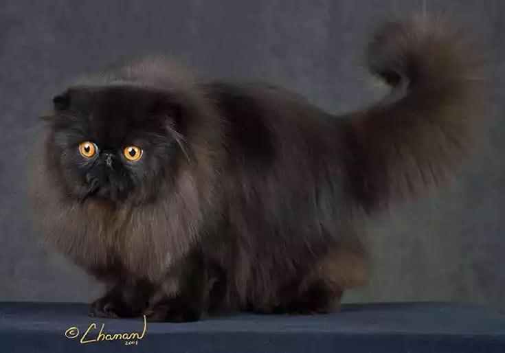 blackcat-02