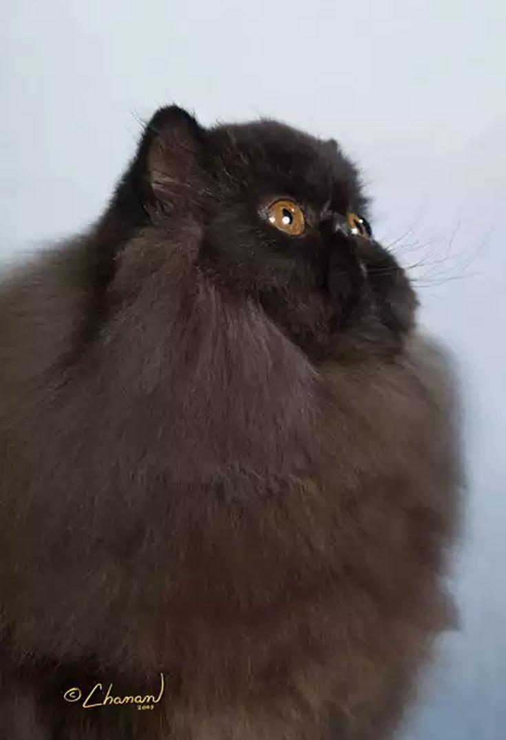 blackcat-03