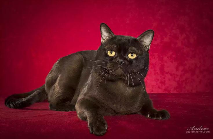 blackcat-05