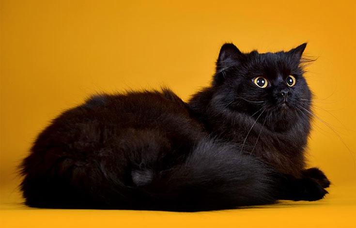 blackcat-06