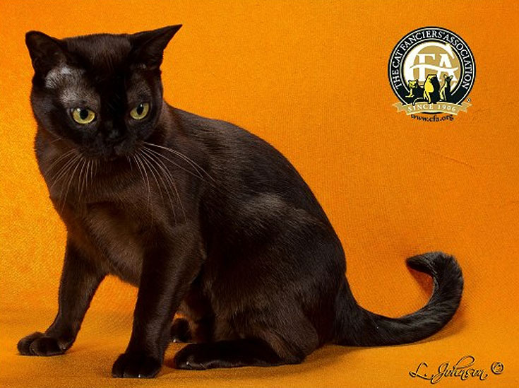 blackcat-07