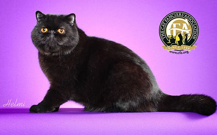 blackcat-08