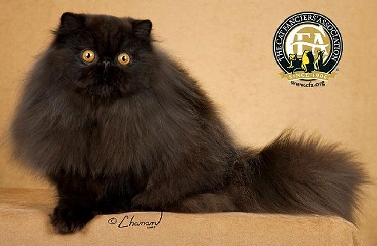 blackcat-09