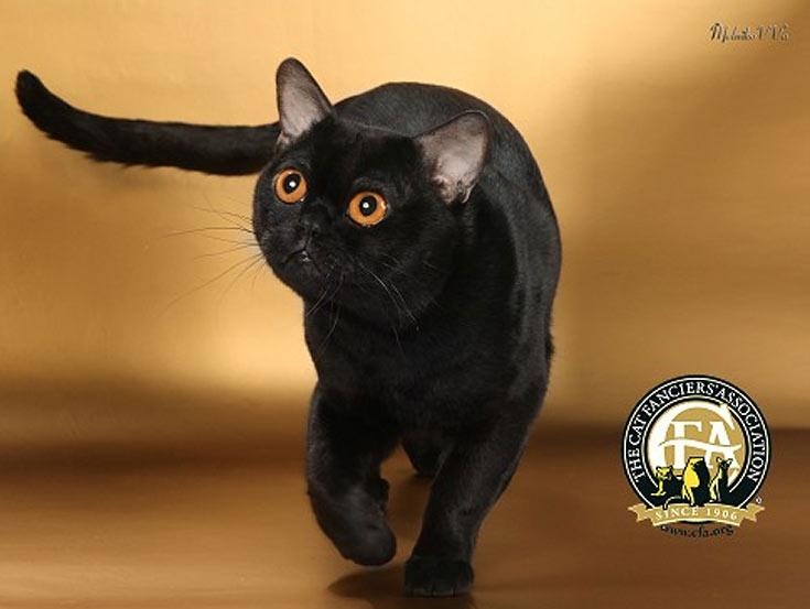 blackcat-10