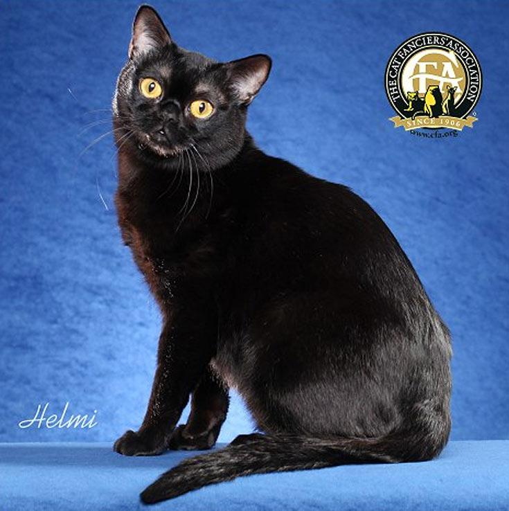 blackcat-11
