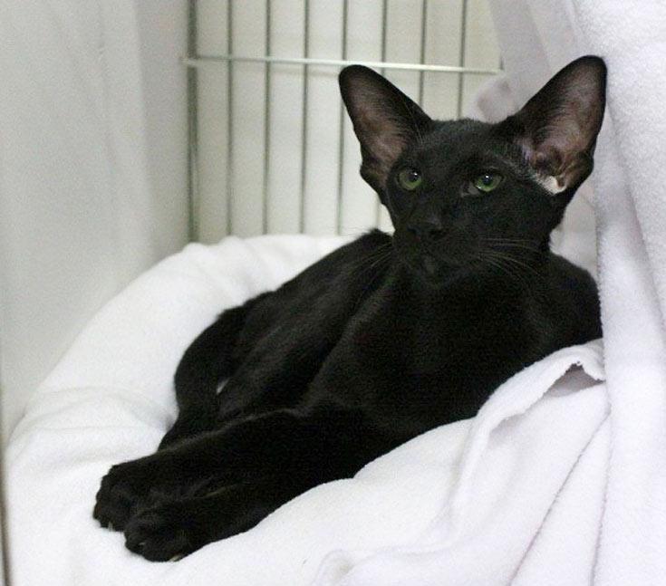 blackcat-12
