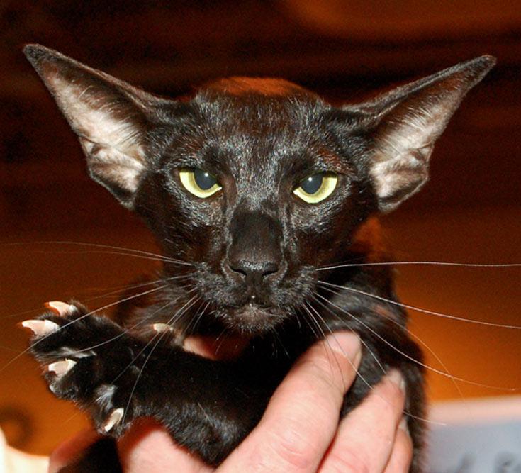 blackcat-13