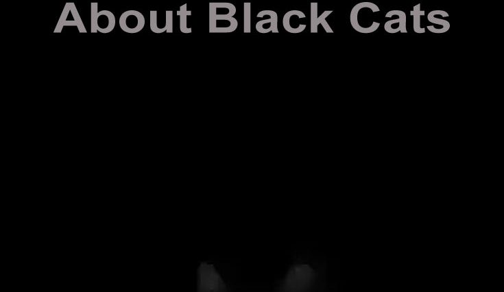 8 facts about black cats