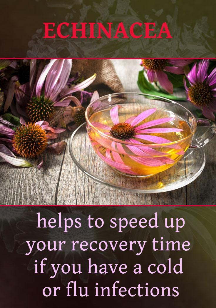 02-echinacea-helps