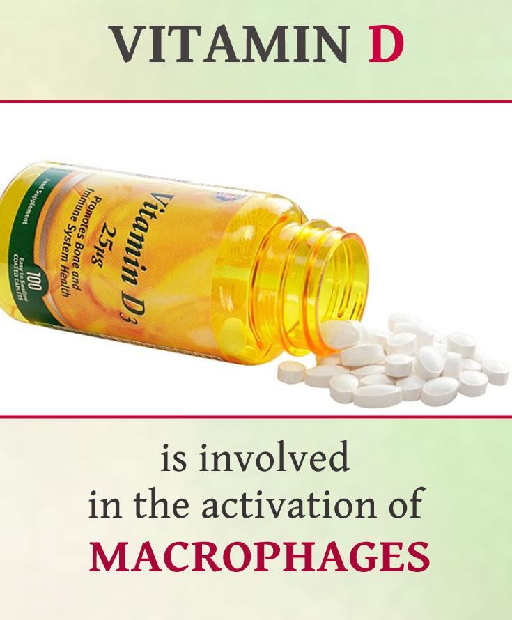 04-vitamin-d-macrofages