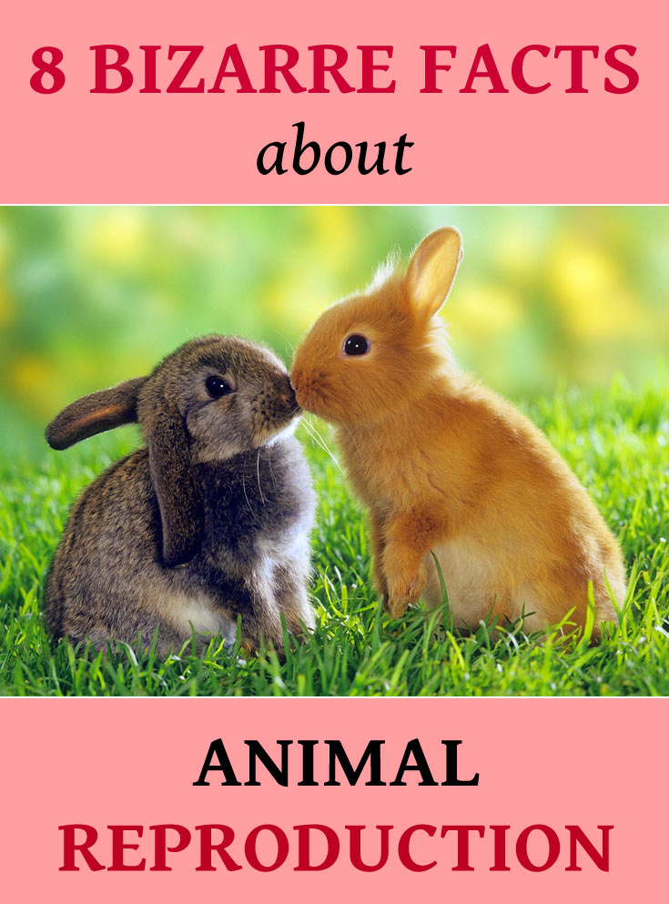 animal-reproduction-facts