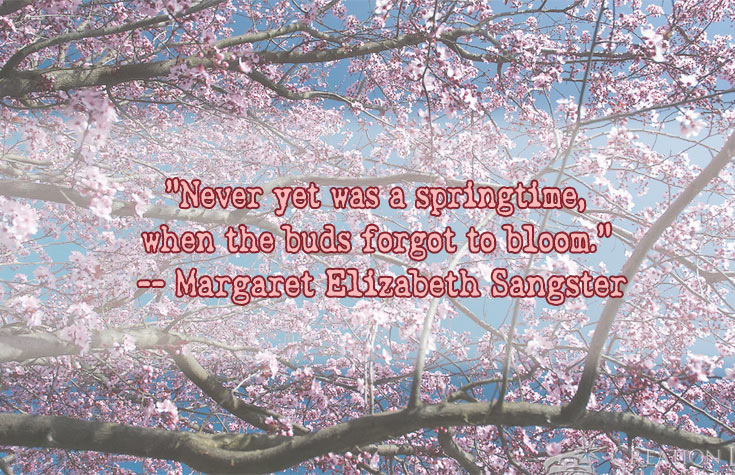 spring time bloom quote