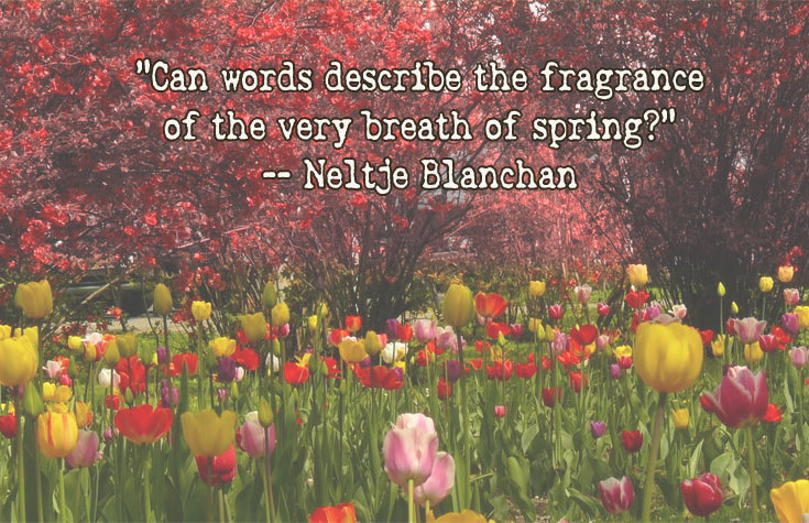 spring fragrance quote