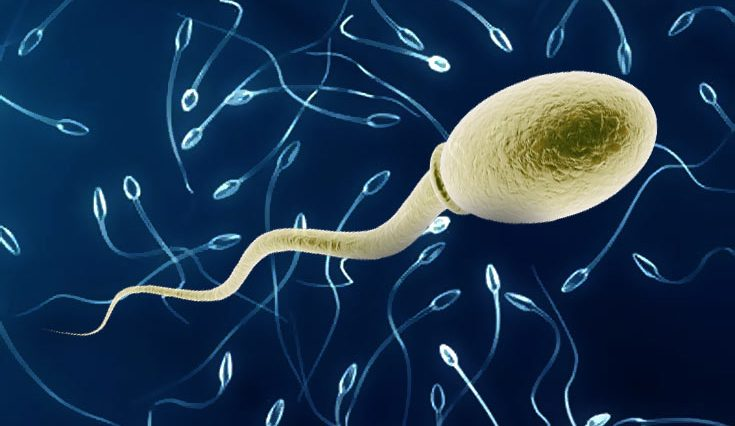 health-benefits-of-sperm