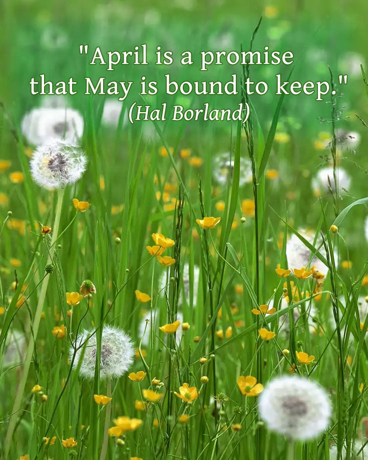 quote about may